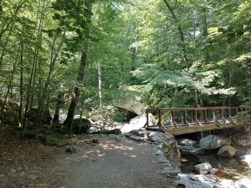 footbridge in the Vizzavona forest